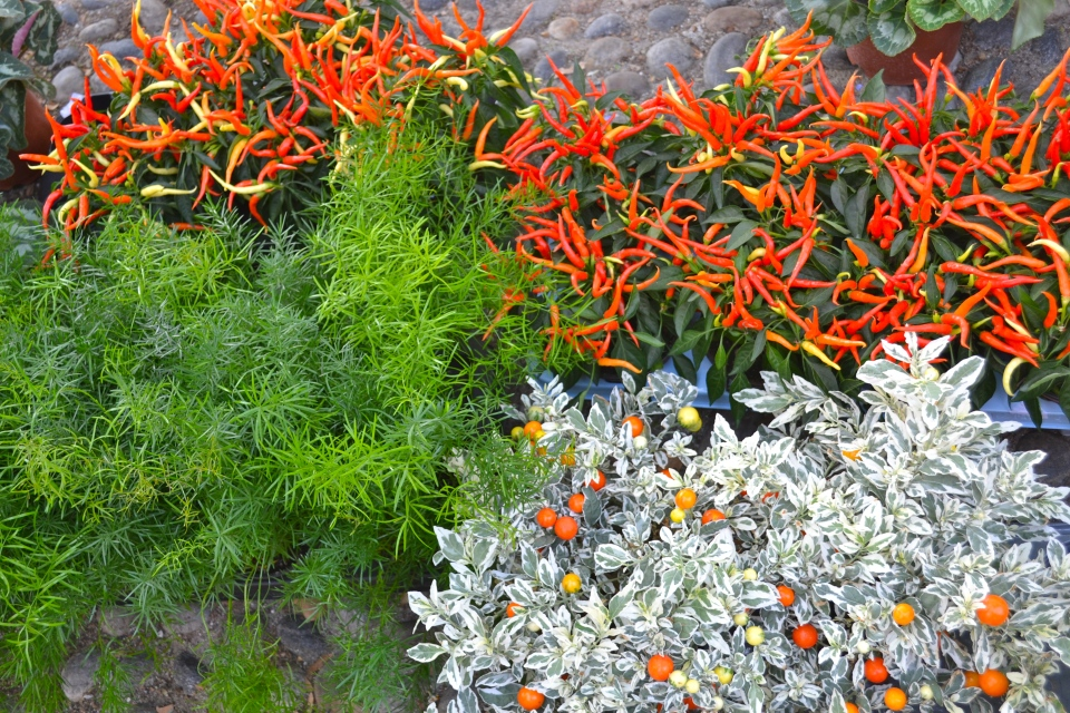 Floralia, Piazza San Marco, Milan