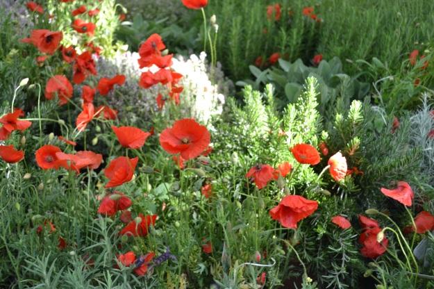 Orticola Milan Flower Market