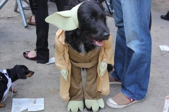 Best Halloween Costume